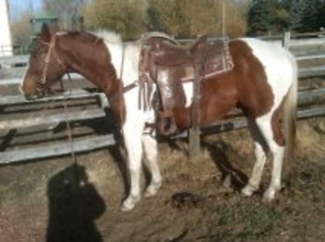 Reduced BROKE!Ranch/performance/rope/rein!Safe!Top bred cowhorse