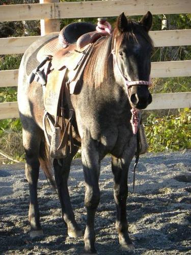 REGISTERED QUARTER HORSE BLOWOUT SALE