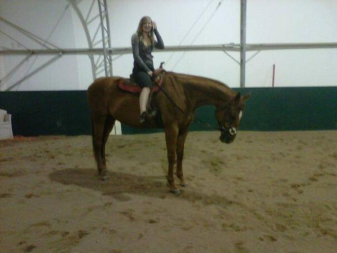 Registered TB Mare for sale, 16.2(700 if gone by sunday)