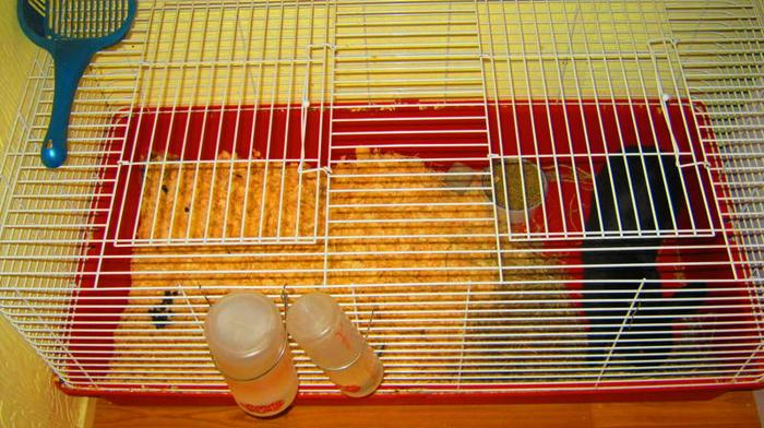 Rex Rabbit and XL Cage