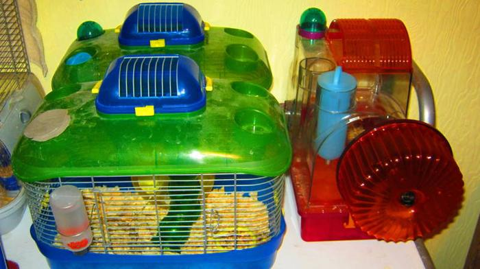 Roborovski Hamsters and Cages