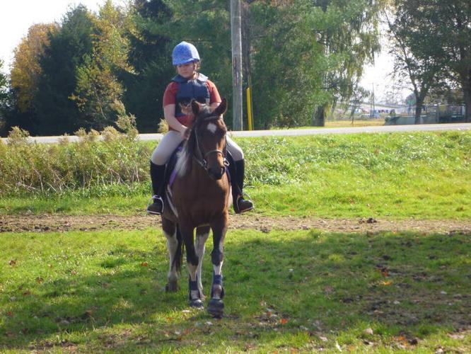Safe, easy to ride large pony available for in barn lease