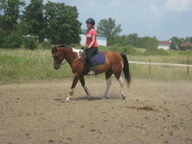 Safe, easy to ride large pony available for lease