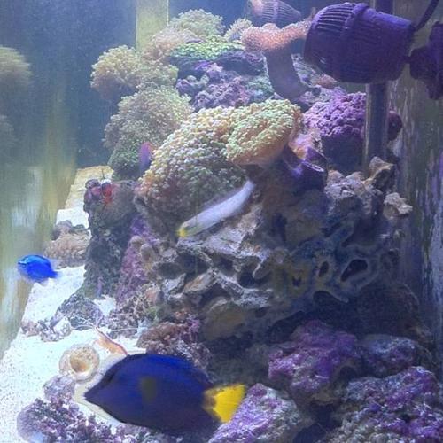 Salt water marine aquarium fish tank