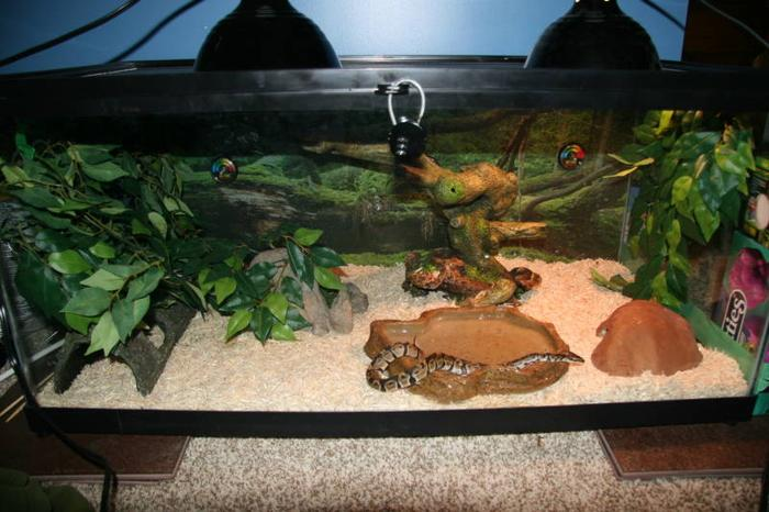 Small ball python 40 gallon tank 10 gallon tank all for 10 fish in a tank riddle