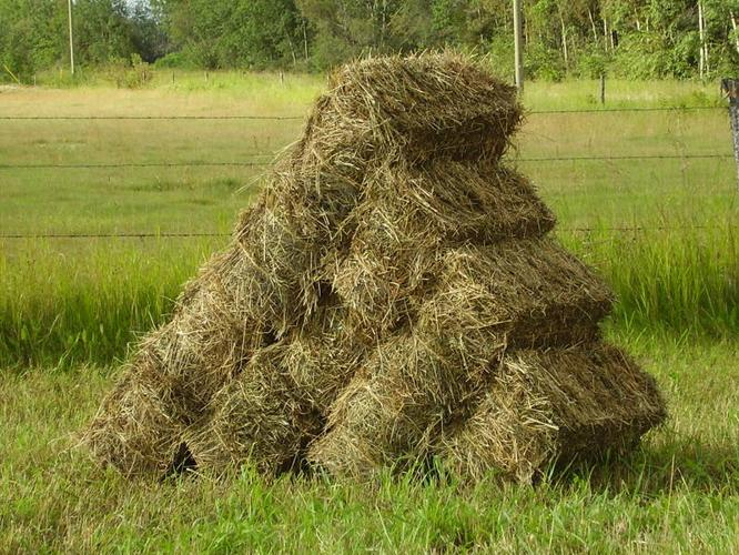 Small Square Bales for Animal Feed