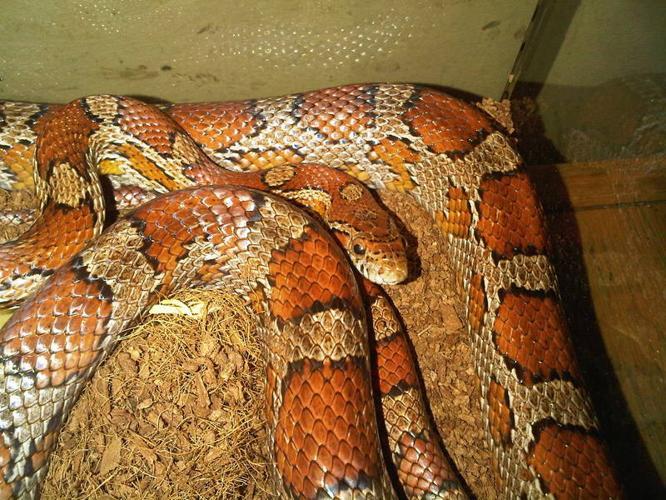 Snake and Terrarium