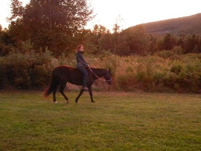 Sweet Black QH mare for sale