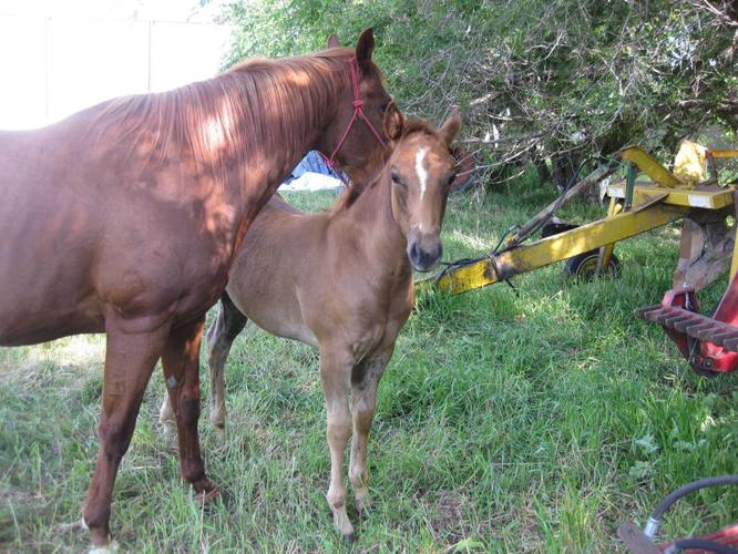 Sweet filly for sale