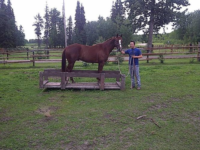 Sweet four year old Quarter Horse Gelding