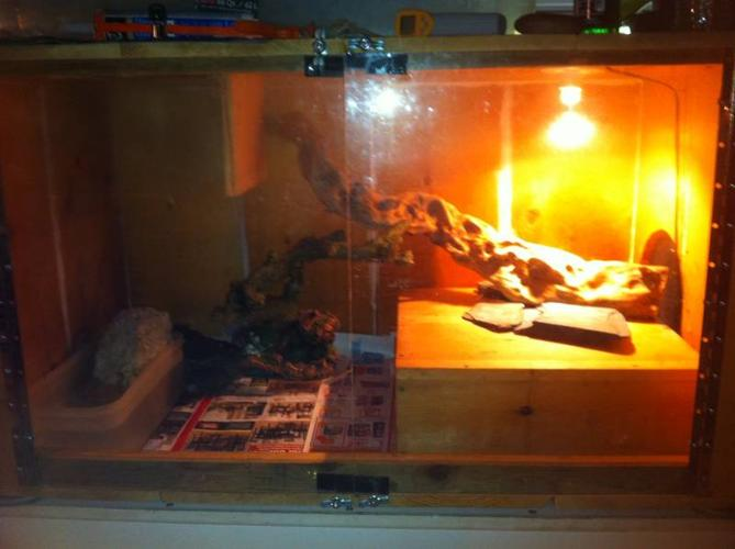 tame columbian tegu and big cage for sale in st thomas ontario