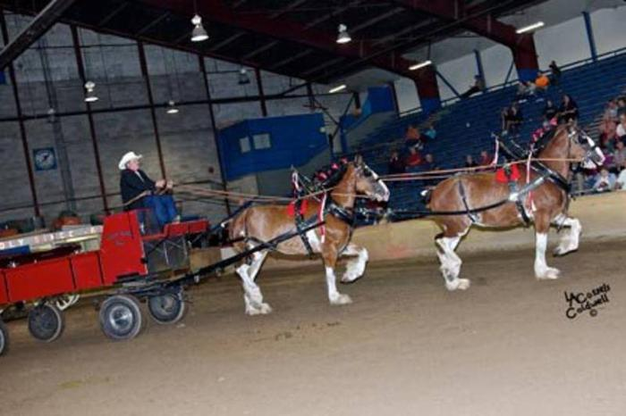 Team of Redgistered Clydesdale Mares