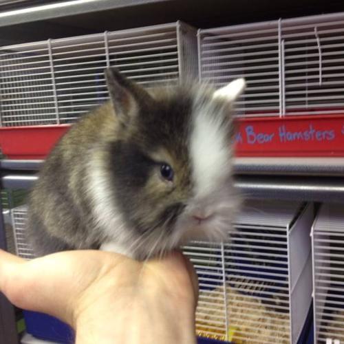 The cutest Bunnies Ever!!