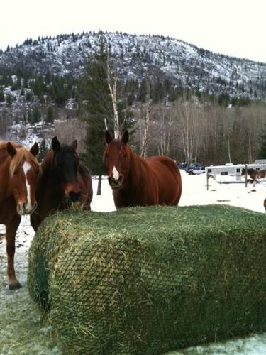 The Slow Feed Hay Net that Veterinarians Use and Recommend!