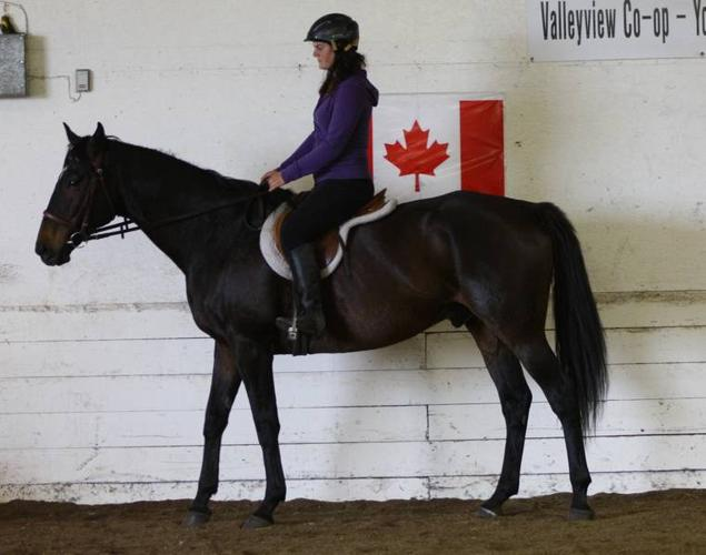 Thoroughbred for Sale - Cluny Clipper