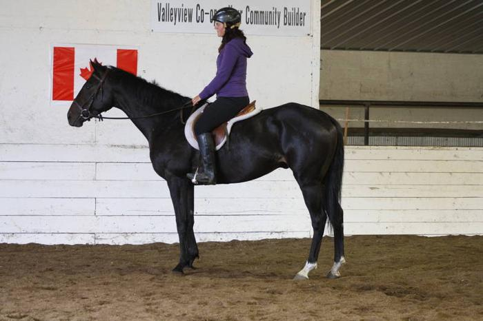 Thoroughbred for Sale - Ocean Prospector