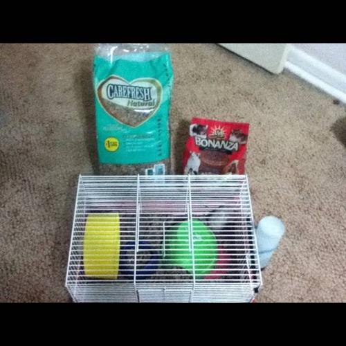 Two hamsters needs a home! (includes cage and supplies)