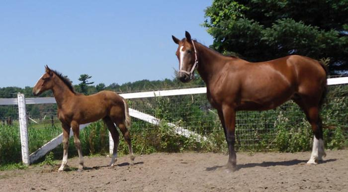 Two Mares for Sale - Trail Horses!
