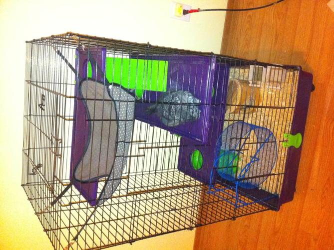 Very friendly chinchilla with large cage and all accessories