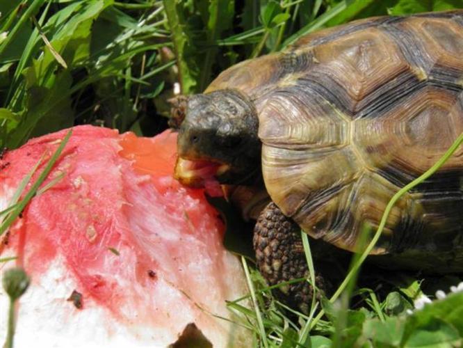 Wanted: WANTED Kinixys Belliana Nogueyi Tortoises