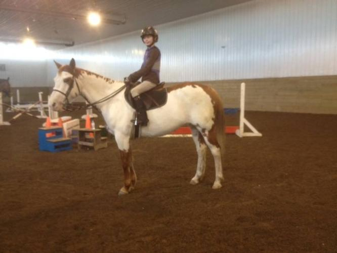 Wonderful kids horse, Make an offer before she starts showing!