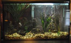 10 gallon fish tank that comes with three small freshwater fish (lots of room for new additions) I'm need to sell them because I don't have the time to care for them anymore Comes with absolutely everything you need including: tank with lid and light