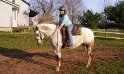 we are selling our 10 year old appy /mix horse... we bought for our 11 year old daughter this horse is a nice horse... however she needs a experienced rider... she has had training...she just needs a rider that can push her. She is 15.2 hh... and a