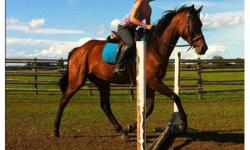 WICKLOW HILLS is a pretty 10 yr old thoroughbred mare available for adoption to a loving home. She is off-track and then was a broodmare for a few years but has been re-started as a pleasure horse with potential for jumping   She is 16.2 hands, nice