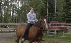 """""""Electra is a Bay Quarter horse cross Arab Mare, that stands 14.5 HH. Electra needs an experienced rider, she has a lot of get up and go. She has very good ground manners. She is the easiest horse to catch, she comes right to you. Selling as I am not"""