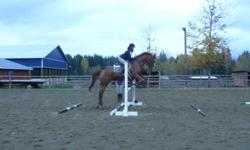 16.2hh TB Gelding, with extensive schooling.   3ft. jumping Champ. &  2'9 Reserve Champ. at VDRC this spring.  Successfully evented this year, has schooled up to pre-training, is great with water, ditches, banks etc.  Dually is fantastic on the trails,