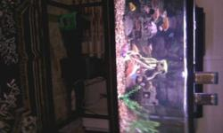 120 gallon fish tank included are the air filters fish and stand and all rock and lites.  fish are opie peacocks electric blues and  cichlids.  please contact if interested tank is up and running you will have to see to appreciate Tank  Comes with