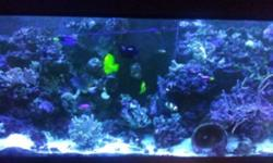 High quality setup with over 150 lbs of high quality rock Corals and most fish included Email for more details This ad was posted with the Kijiji Classifieds app.