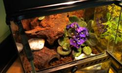 A beautifully furnished, complete custom home for your small reptile, amphibian or insect! I build the backgrounds myself using non-toxic, lightweight materials. My terrariums are specifically designed for critters requiring higher humidty and