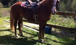 This Big Mare is fun to ride ! She was an event horse and a schooling horse . Has a nice jog , lope , canter . Looking for a relaxed setting . Must have shelter and turnout / field Good english or western , games etc *** Great Trail Horse *** good on road