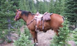 Fred is a 12 yr old well broke boom proof gelding, he is a good all around horse. About 15hh, loads trims, has had shoes on him, good for riders of all ages. He is 100 % sound. He has been used as a pack horse and riden in the mountains and on trail