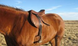 - Brand new, used less than a dozen times - Started rodeoing and saddle has since been outgrown