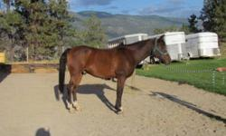 Oakley is a 15.2H registered Arabian. He is suitable for a intermediate/experienced rider. He is solid training level dressage, and loves the trails. He would make a great endurance horse! He clips, bathes, trailers etc. All tack included for an extra
