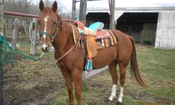 """15"""" Billy Cook The Wave Barrel Saddle with matching headstall and Breastplate.   Gorgeous saddle ..FQH bars.   Mint shape....Barely broken in.  Have matching Pro Choice boots as well..."""