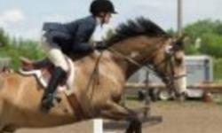 Buckskin gelding for free lease to experienced english rider wanting to do hunters. Must be able to school/train and be dedicated and reliable. Must be kept at owners yard (15 mins out of city). Must be willing to school/train minimum of 3 to 4 days per