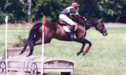 I am offering a 16.2hh reg Thoroughbred mare by Ascot Knight. Has evented to pre-training, hunted, taken part in dressage and event clinics. She baths, clips, trailers no problems. Loves to trail ride and loves jumping. Very sweet mare.   She has been