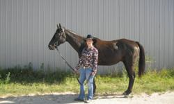 I am offering my 16hh, 7 year old black thoroughbred named Spartan up for part-board. He recently came off the race track this summer but you couldnt tell. he is a dream to ride. He is not dangerous at all. He has a wonderful walk, trot and canter. He is
