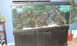 170 gallon salt water tank    over 200 pounds of live rock    100 pounds of live sand     2100 gph cpr overflow      70 gallon custom sump      aqua chiller (4 months old)       2 new pumps (6 months old)      Barracuda r/o system      Lots of live