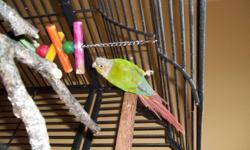 Conure and large cage.