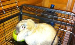 i have a one year old lop eared rabbit comes with steel cage (paid over $200) carrier (paid $40) and much more. Reduced price from 150 to100.