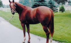 Registered Name : VANDYS BO PEEP Color: Chesnut Age: 8 Height: 15.1 Beautiful 2003 registered chesnut mare. Sired by Peeping Bo Badger out of a Sugar Vandy mare. Look her up on all breed pedigree. Professionally started, team penned, sorted, been on