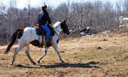 Bella is a 4 year old Bay Tabiano mare. She is just under 15hh, a good 1100 lbs, nice solid build. Had a beautiful colt (also for sale) this spring out of Johnnys Silent Joak (http://www.kroseranch.com/stallions.html). Bella has 60 days professional