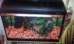 My son has given up interest in his 20 gallon aquarium. He has given away all the fish and now wants the aquarium gone. Comes complete with gravel,filter,and some accessories. You are welcome to take the stand it is on if you need it. No leaks and can be