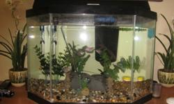 I am selling my glass aquarium with fish and accessories.  Accessories will include:   * everything in tank + filter + heater * food * water conditioner treatments * magnetic glass cleaner & handle algae     glass cleaner * correct Ph balancing kit for