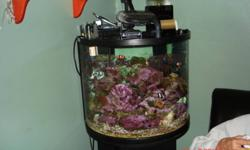 nano saltwater fish tank includes fish, corals, tank lights, refugium ,live rock, sand .over 700$ invested.i have a new tank so I do not want to run 2 tanks for more info contact me
