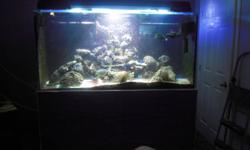 270 gallon tank with 75 gallon sump $1,750.00-OBO (comes complete with lighting, pond pump and piping system) - small crack in sump, that never caused us any problem over the two years that we had it running and a ballast or two needs to be replaced to